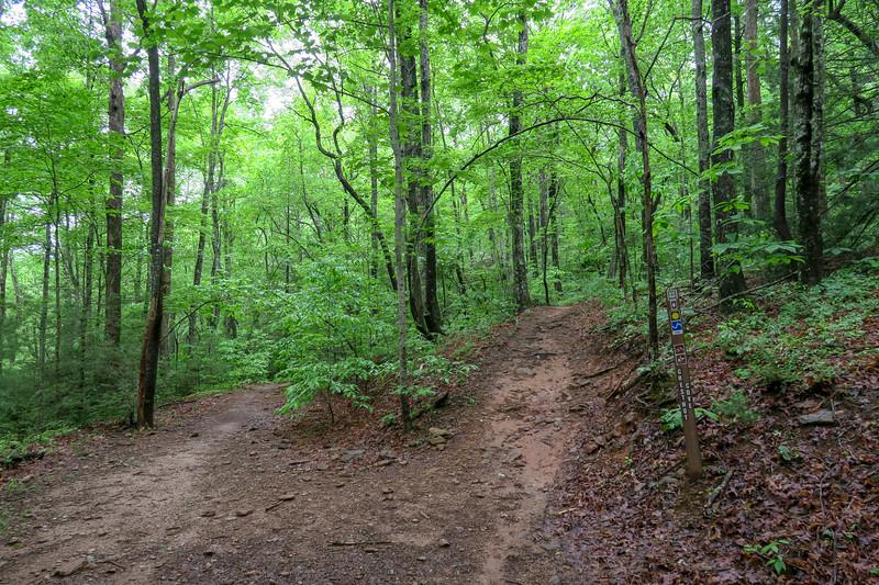 Chestnut Cove/Explorer Loop Trail Junction -- 2,590'