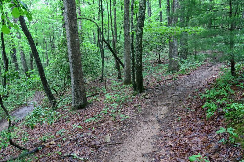 Chestnut Cove Trail -- 2,680'