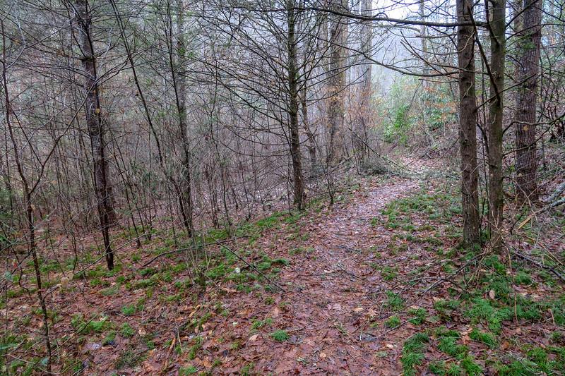Clawhammer Cove Trail -- 2,500'