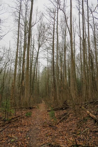 Clawhammer Cove Trail -- 2,600'
