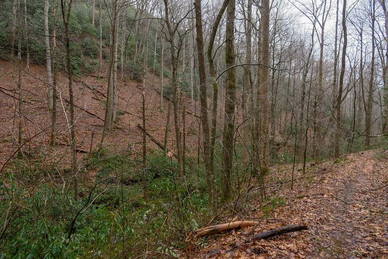 Clawhammer Cove Trail -- 2,650'