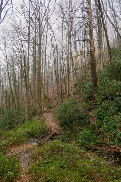 Clawhammer Cove Trail -- 2,750'