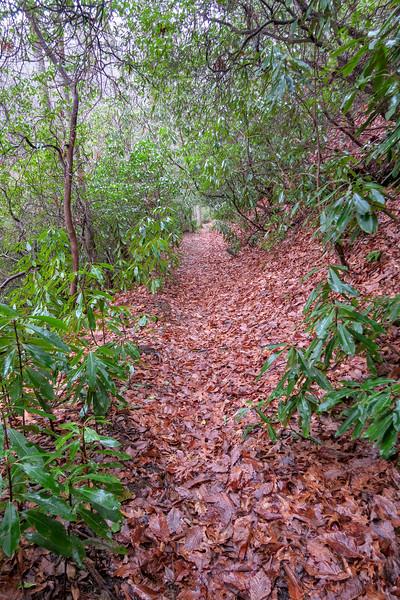 Clawhammer Cove Trail -- 2,850'