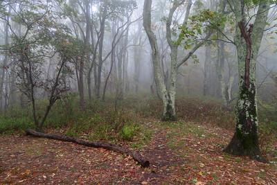 Cold Mountain/Art Loeb Trail Junction (Deep Gap) -- 5,000'