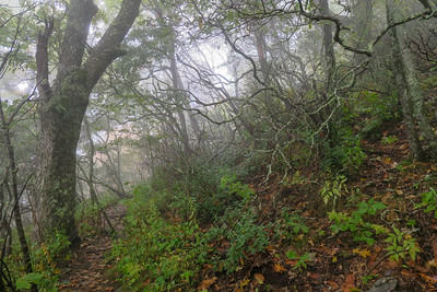 Cold Mountain Trail -- 5,450'