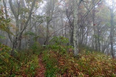 Cold Mountain Trail -- 5,330'