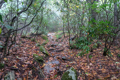 Cold Mountain Trail -- 5,200'