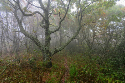 Cold Mountain Trail -- 5,720'