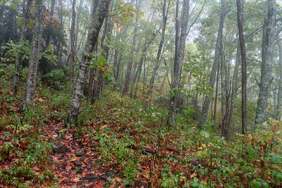 Cold Mountain Trail -- 5,050'