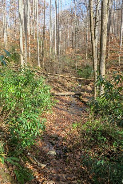 Coontree Loop Trail -- 2,650'