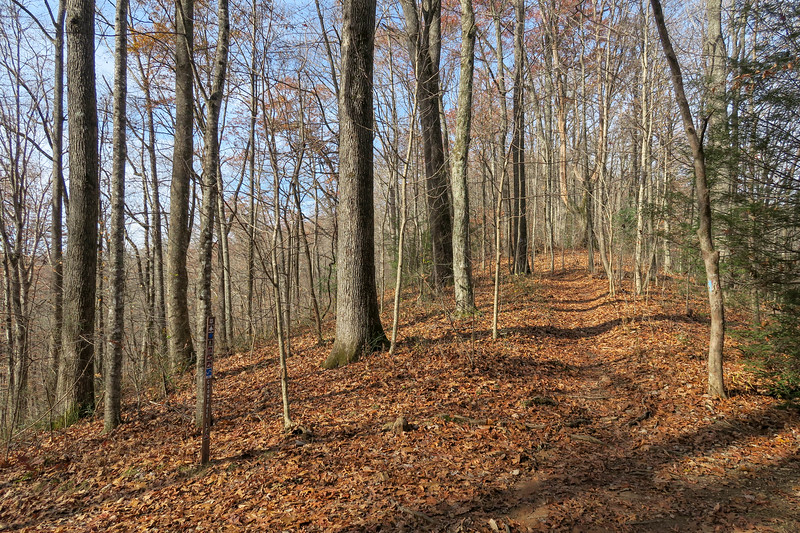 Coontree Loop/Bennett Gap Trail South Junction (Coontree Gap) -- 2,950'