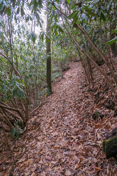 Coontree Loop Trail -- 2,900'