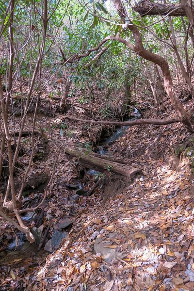 Coontree Loop Trail -- 3,000'