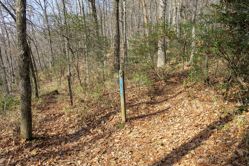 Coontree Loop/Bennett Gap Trail North Junction -- 3,300'