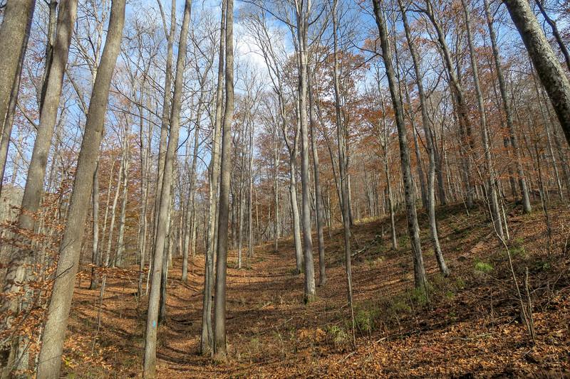 Coontree Loop Trail -- 2,760'