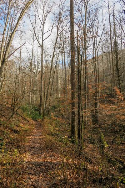 Coontree Loop Trail -- 2,620'