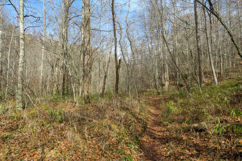 Coontree Loop Trail -- 2,260'