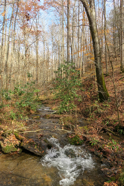 Coontree Creek -- 2,300'