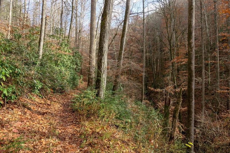 Coontree Loop Trail -- 2,450'