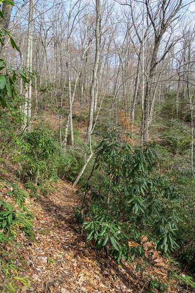 Coontree Loop Trail -- 3,050'