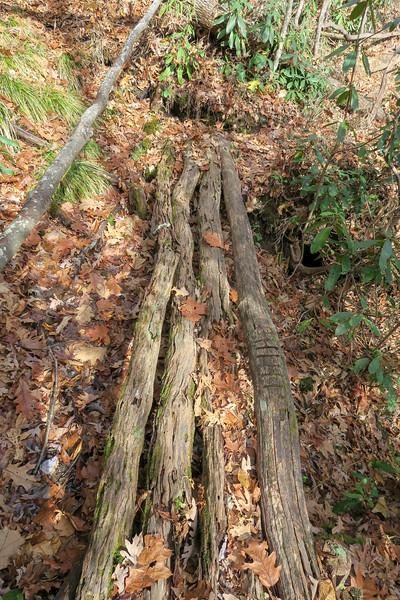 Coontree Loop Trail -- 3,160'