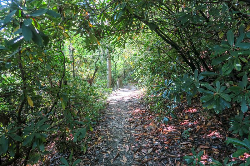 Cove Creek Trail -- 2,860'