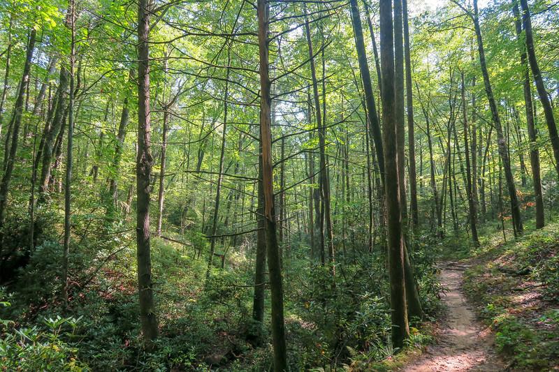 Cove Creek Trail -- 2,940'