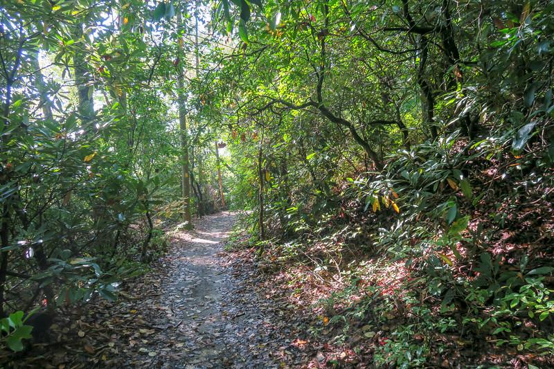 Cove Creek Trail -- 2,900'