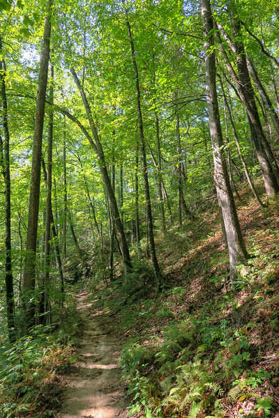 Cove Creek Trail -- 2,920'