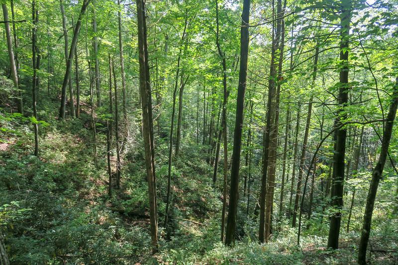 Cove Creek Trail -- 2,820'