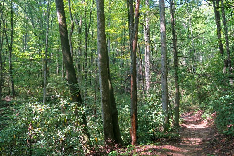 Cove Creek Trail -- 2,970'