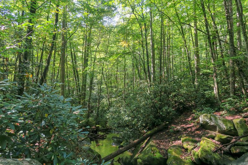 Cove Creek -- 2,760'