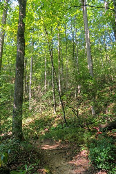 Cove Creek Trail -- 2,840'
