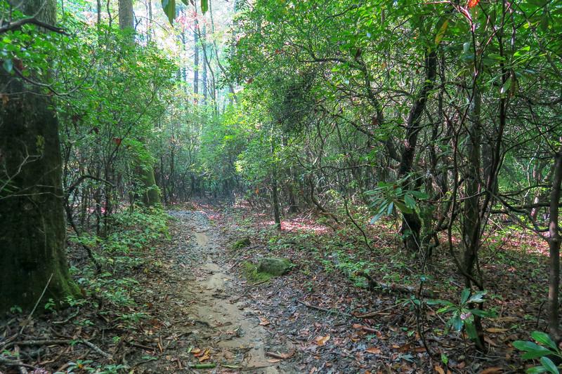 Cove Creek Trail -- 3,100'