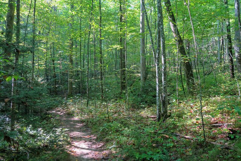 Cove Creek Trail -- 3,050'