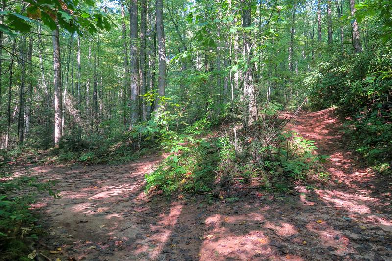 Cove Creek Trail -- 3,070'