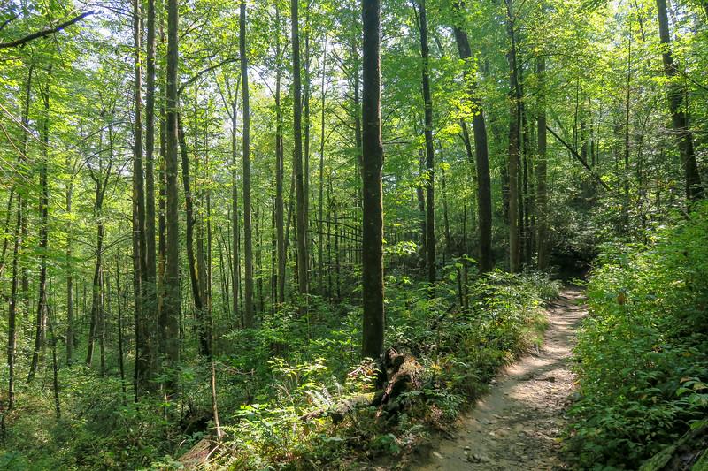 Cove Creek Trail -- 2,800'