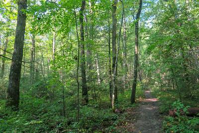 Cove Creek Trail -- 3,030'
