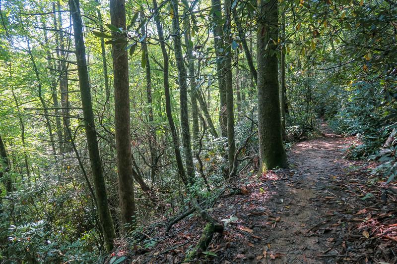 Cove Creek Trail -- 3,000'