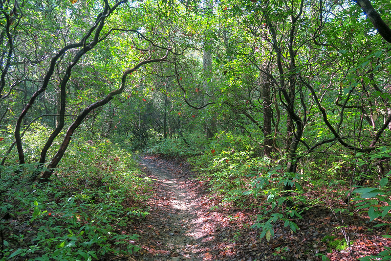 Cove Creek Trail -- 3,040'