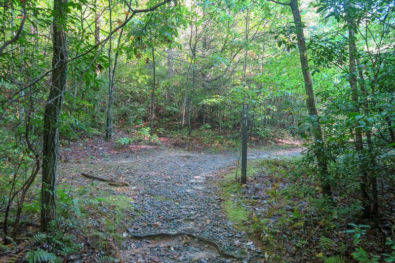 Cove Creek Trail @ F.R. 225A -- 3,100'