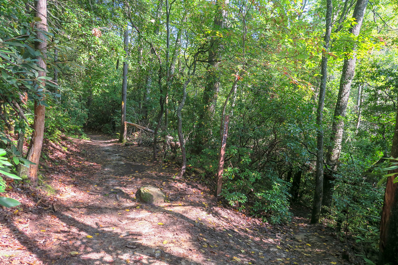 Cove Creek Trail/Cove Creek Falls Spur Junction -- 2,880'