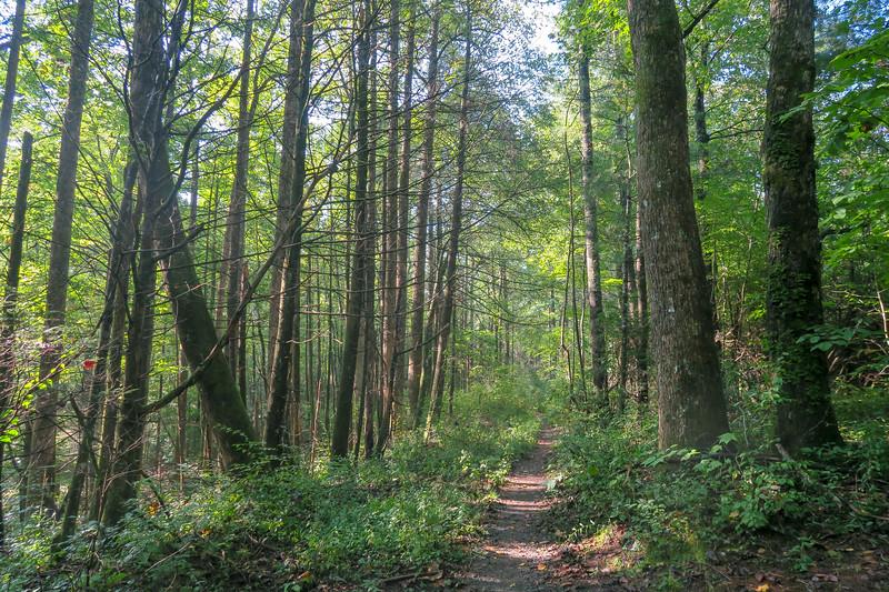 Cove Creek Trail -- 3,020'