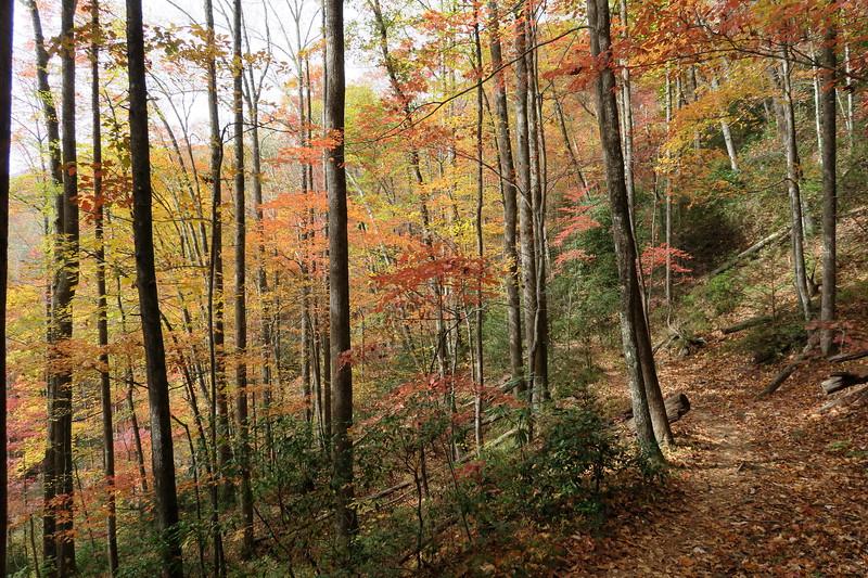 Daniel Ridge Loop Trail -- 2,900'