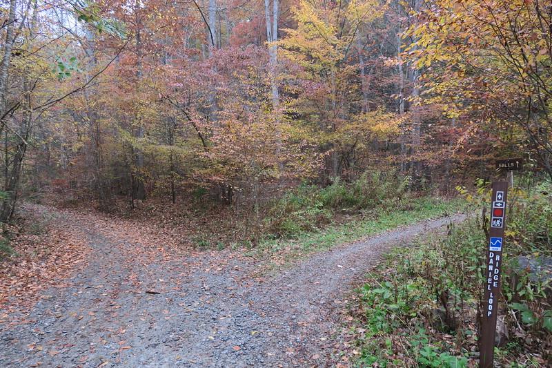 Daniel Ridge Loop Trail -- 2,630'