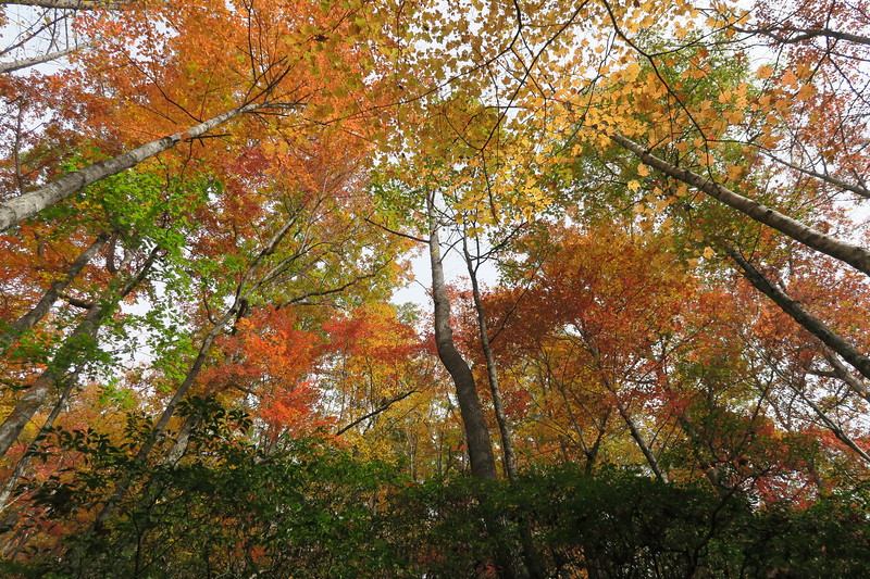 Daniel Ridge Loop Trail -- 2,800'