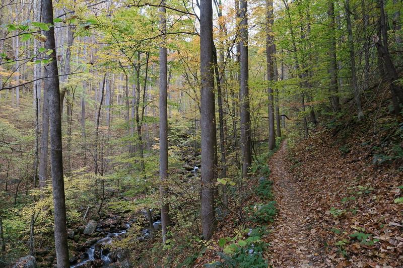 Daniel Ridge Loop Trail -- 3,100'