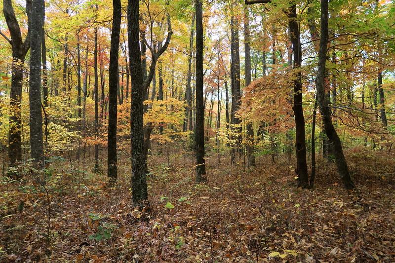 Daniel Ridge Loop Trail -- 3,420'