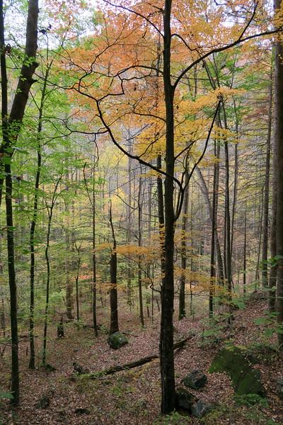 Daniel Ridge Loop Trail -- 2,850'