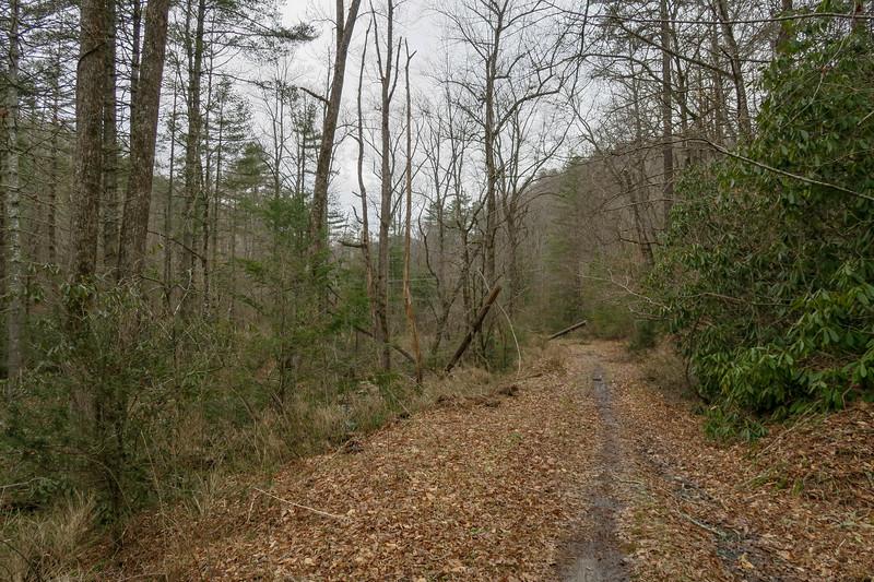 Davidson River Trail -- 2,390'